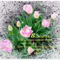 Милым и прекрасным женщинам!!! :: Тамара (st.tamara)