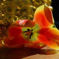 И знают все страны, Об этом поют: Всегда всем тюльпаны  Счастье несут. :: Лара Гамильтон