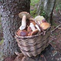белые грибочки. :: ВАЛЕНТИНА ИВАНОВА