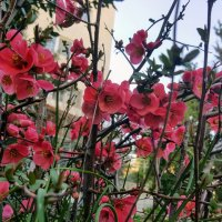 Весна :: Ирина