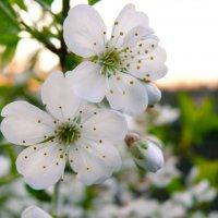 Весна :: Елена Неведицына