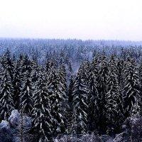 Зимний лес :: Александр Сансар