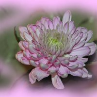 Какой же праздник без цветов?? :: Tatiana Markova