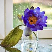 Цвета неба прекрасная лилия раскрывает свои лепестки... :: Лара Гамильтон