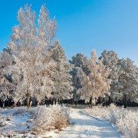 Морозный денёк :: Анатолий Иргл