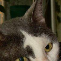 Выразительные глаза кошки. О чем она думает? :: татьяна