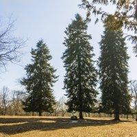 Весной в парке :: Герасим Харин