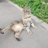 Кошка у подъезда :: Svetlana Lyaxovich