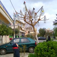 Бутылочное дерево. :: Оля Богданович