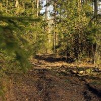 гуляя по лесу :: оксана