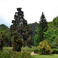 Английский парк Казерты :: Ольга