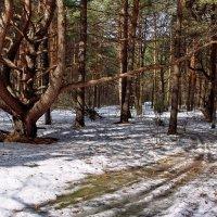 Уже забыты зимние дороги... :: Лесо-Вед (Баранов)