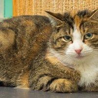 Кошки тоже грустят :: Александр Петров