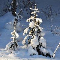 Стражи леса :: Татьяна Соловьева