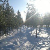 Тропа в зимнем лесу :: Irina