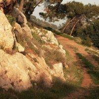 кусочек лесной дороги :: evgeni vaizer