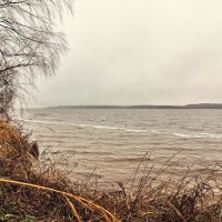 Холодный осенний ветер :: Борис Руненко