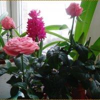 Мартовские цветы :: Вера