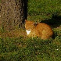 Прикорнул на солнышке... :: Sergey Gordoff
