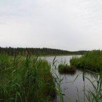 На озере. :: ВАЛЕНТИНА ИВАНОВА