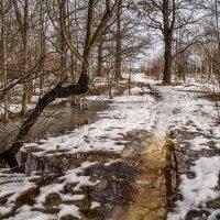 Дорожка из Февраля в Март :: Андрей Дворников