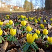 """""""...Как вольно жизнь весной вокруг кипит!  Душа поёт, ей вторит вся природа!..."""" :: Galina Dzubina"""