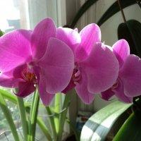 Орхидея :: Ириша ****