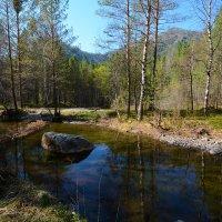 Весенний лес. :: Валерий Медведев