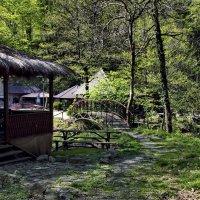 В лесу :: Евгения Курицына