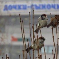 Птичка божия не знает ни заботы, ни труда :: Андрей Лукьянов