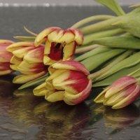 Тюльпаны :: Михаил Измайлов