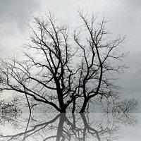Графика ветвей :: Асылбек Айманов