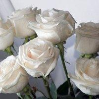 Белые розы :: Ирина