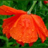 После дождя... :: Светлана