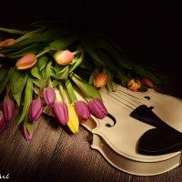 Белая Скрипка :: Регина Циклинская