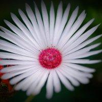 Белые стрелы :: Swetlana V