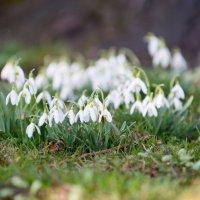 весна :: Viktor Schwindt