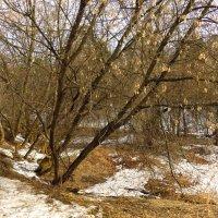 Весна идет, весне дорогу :: Андрей Лукьянов