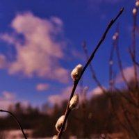 весна пришла :: геннадий щербак
