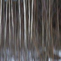 весенний лес :: Светлана Моисеева