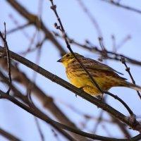Первые перелётные птицы. :: Paparazzi