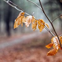 зимние листья.. :: юрий иванов