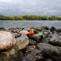 Роза на камнях :: Андрей Бондаренко