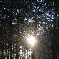 Зимнее солнце в лесу :: spm62 Baiakhcheva Svetlana