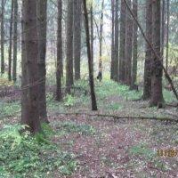 лес :: Maikl Smit
