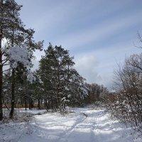 Побережье Балтийского моря после мартовского снегопада :: Маргарита Батырева