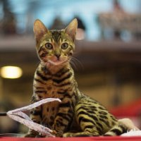 Домашнее животное :: Aнна Зарубина