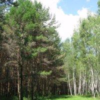 У деревни Жёлтиково. Смешанный лес. :: Владимир Драгунский