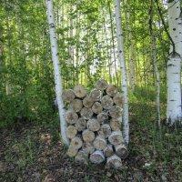 Откуда дровишки? - «Из лесу, вестимо... :: Vladimir Perminoff