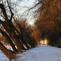 Зимнее утро... :: Юрий Цыплятников